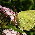#motyle #ogród