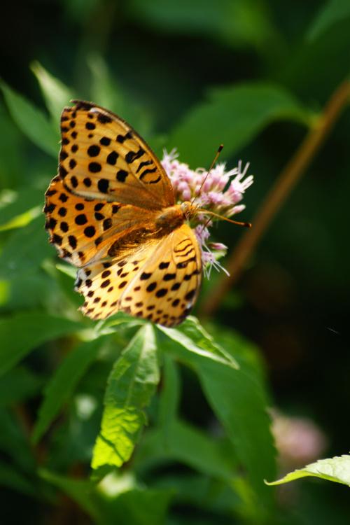 Motylek #motyl
