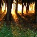 po deszczu #deszcz #mgła #natura