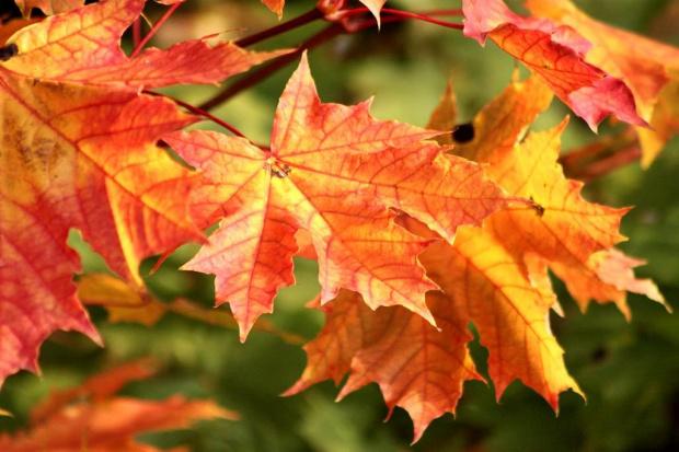 jesiennie :))