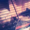 Vegas i Sammy #szczur #szczury
