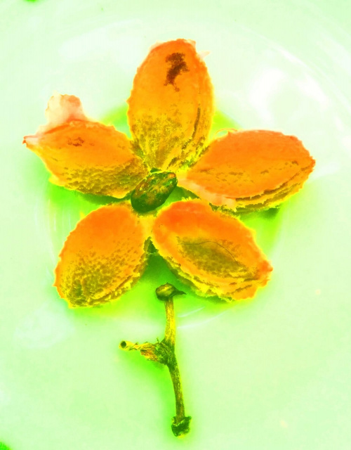 Kwiatek... ?