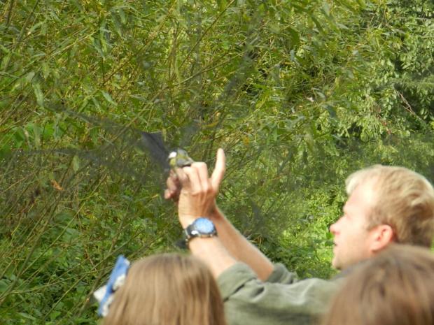 #bocian #Łask #przyroda #ptaki