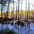 Na spotkanie z przyrodą #przyroda #krajobraz #plener #las #woda #drzewa #bagna