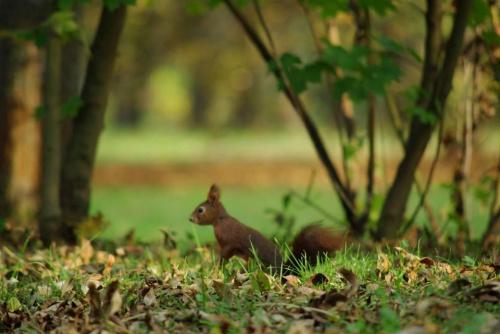 wiewiórka #park #wiewiórka #jesień
