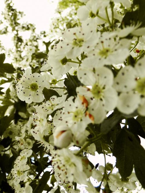 Maj #drzewa #natura #przyroda #wiosna