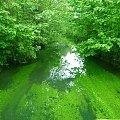 Majowa zielona rzeczka. #Przyroda #woda #rzeki