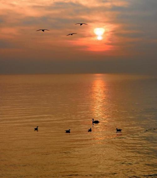 słowo o ptakach ...i słońcu ...i wodzie #ptaki #słońce #woda