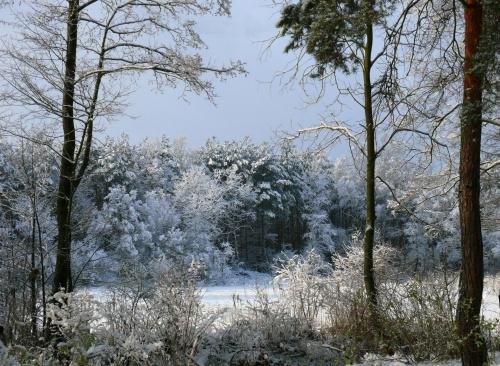 luty #grudzień #gwiazdki #luty #stycvzeń #śnieg #święta #zima