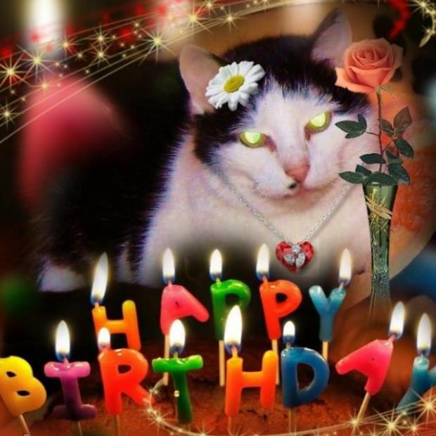Urodzinowe buziaki kochana Helanko:) LOVE #Urodziny #koty #impreza #życzenia
