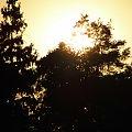 MazowieckieMazowieckie #lasy #łabądź #pola #przyroda #zboża