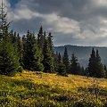 Piękno parku Gorczańskiego #drzewa #góry #liście #łąki #morza #natura #natury #przyroda #rzeki #urok #zieleń #zwierzęta