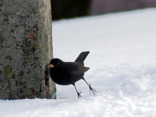 ciężkie powroty #przyroda #ptaki #zima