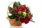 http://images70.fotosik.pl/592/19de638dd9aea3e2m.jpg