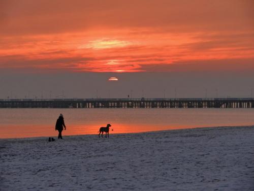 ...znów w porannym słońcu, ale nie zawsze jest tak #wschód #pies #plaża #morze #molo