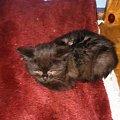 """19-02-2015 Wychudzona bidula po """"zerowym"""" przeglądzie u weta. #kot #kocur #brytyjczyk #grazkoty #hodowla #Rzeszów"""