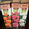 róża z biiedronki #róże