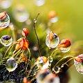 z mchu1 #kwiaty #las #makro #motyle #owady #przyroda #zwierzęta