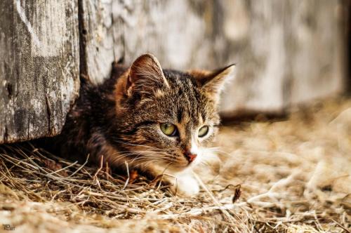 Przyczajona #kot