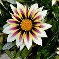 kwiaty, rośliny, owady , piękne #kwiaty #rośliny #owady #piękne