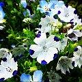 #rośliny #kwiaty #natura #przyroda