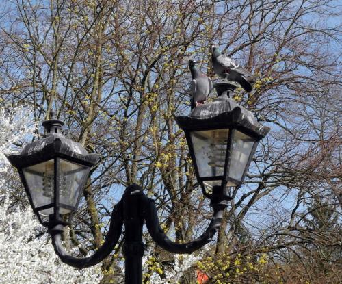 Gołębie #Amfiteatr #elektronik #gołębie #poczta #WiosnaWParku