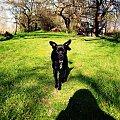 2015 :) #wiosna #ogród #przyroda